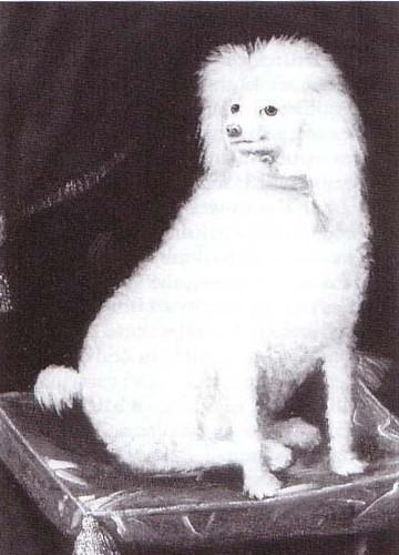 A portrait of Boye, Prince Rupert's poodle